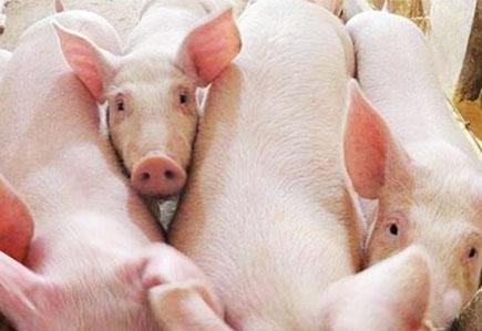 猪场,养殖效益,空气neng采暖